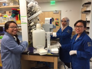 Nina Do, Mahnoor Saleem, and Marisol Hernandez-Cira are assisting in the laboratory.